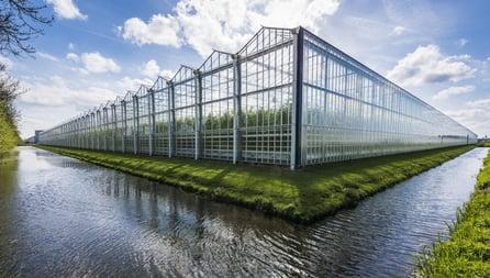 Cannabis green house